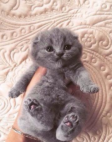 【猫画像】ぬいぐるみ