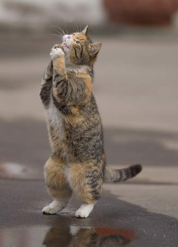 【猫画像】お願い・・・