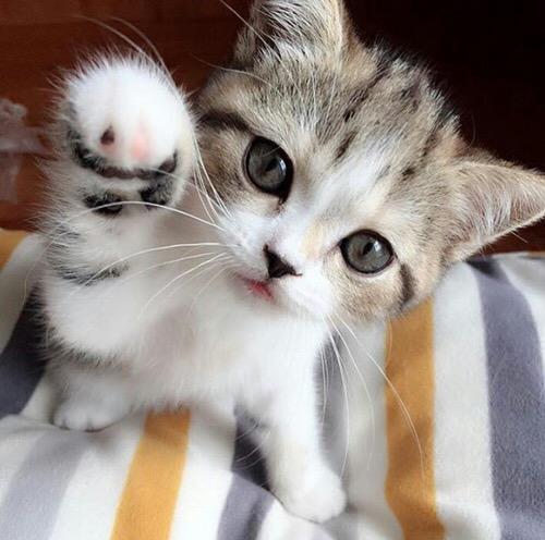 【猫画像】猫パンチ!