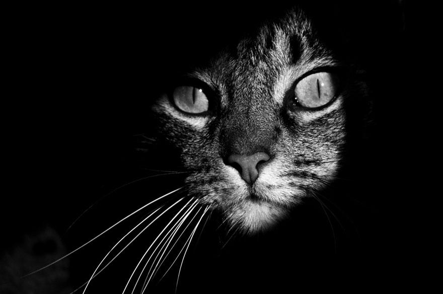 【猫ネタ】神秘的で独特の世界観!?モノクロ写真にうつる猫たち 13選