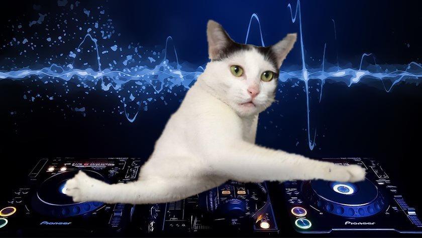 【猫ネタ】猫の変なポーズが話題!?DJコラなどお祭り状態の話題の猫ポーズとは・・・!?