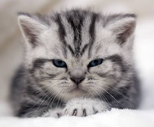 【猫画像】ちょい不機嫌!?
