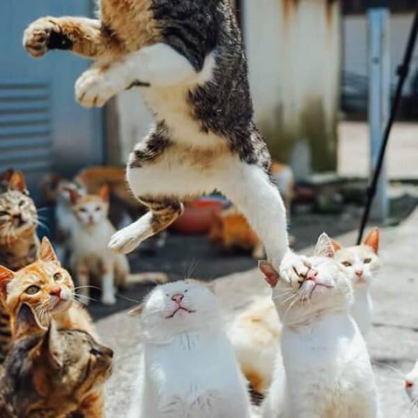 【猫画像】いでっ!