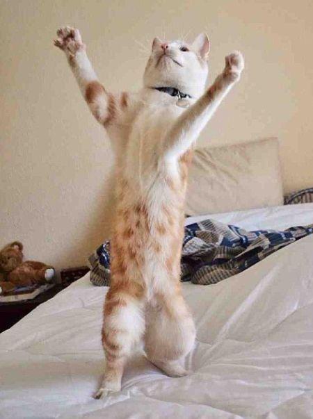 【猫画像】ダンシング!
