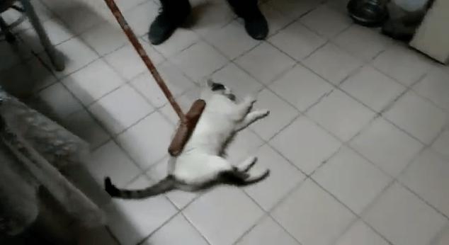 【猫動画】微細なゴミは逃すかも!?吸引力を持たない画期的な「猫モップ」とは・・・!?
