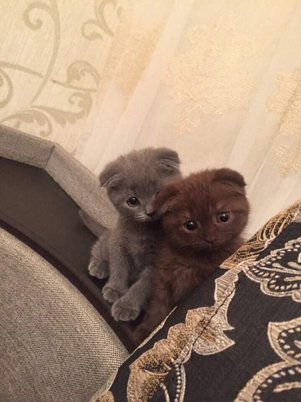 【猫画像】グレーとグレー