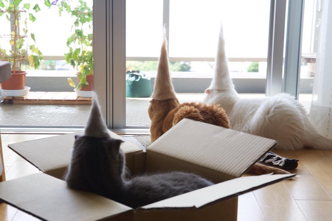 【猫ネタ】猫たちはされるがまま!?インスタグラムで話題の猫毛帽子の猫たちとは・・・!?