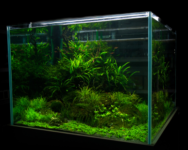 Care of the Freshwater Aquarium |
