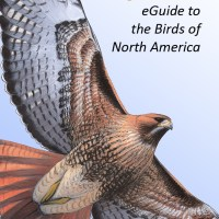 An update to the Sibley eGuide app for iOS