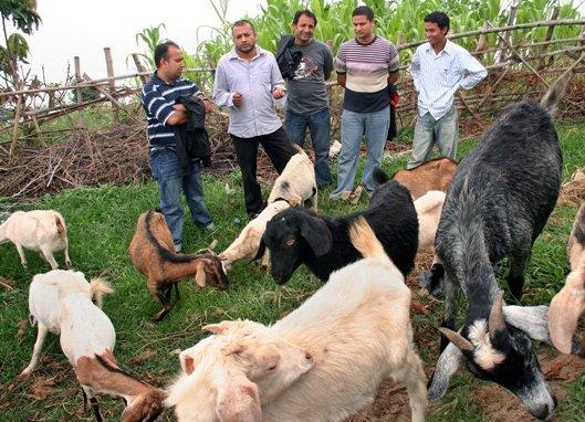 Gagan Thapa goat farm in Nuwakot, Nepal