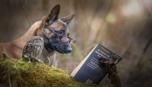 This Friendship Between A Dog And An Owl has gone viral and there are reasons for it!