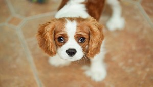 Love dogs? Here are the dog breeds that are the friendliest in the world!!!