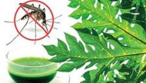 Here are the effective Methods to Treat Chikunguniya at home!