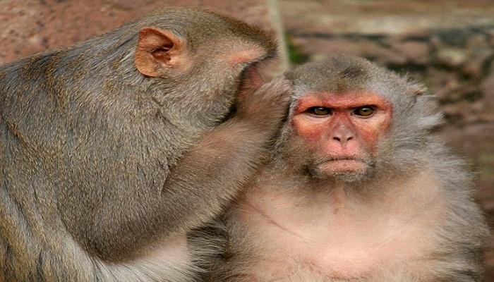 what if monkeys can talk-Netmarkers