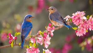 Enjoy trending video of birds enjoing in bird bath