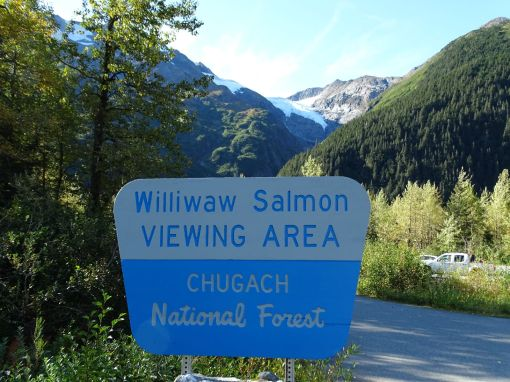 Williwaw Salmon Viewing Area