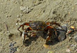 Hallo Krabbe :)