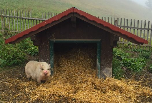 Wachschwein vor der Gundhütte
