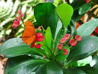 Schmetterlingshaus Key West