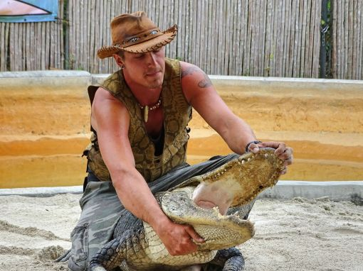 Alligator-Show mit Will