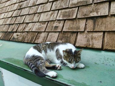 Hemingway liebte Katzen