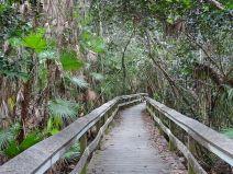 Mahagony Hammock Trail
