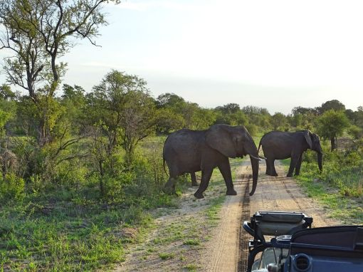 Elefantenherde im Manyeleti Private Game Reserve