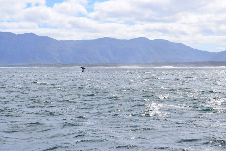 Whale Watching Tour, Hermanus