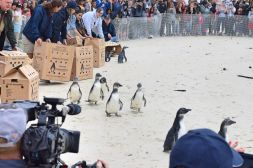 Penguin Festival
