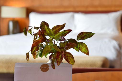 Willkommensgruß, Conrad Pezula Resort & Spa