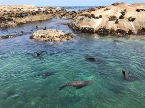 Robbenkolonie bei Hout Bay