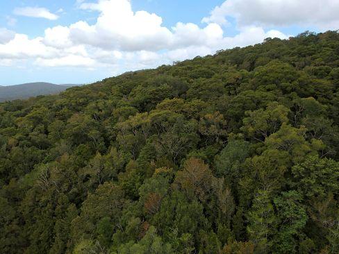 Drohnenaufnahme Knysna Forest