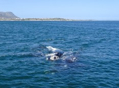 Whale Watching Tour in Gansbaai