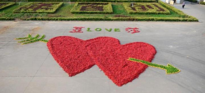 dou ziwang planned to propose to his girlfriend with 99,999 red hot chili peppers arranged in the shape of intersecting hearts