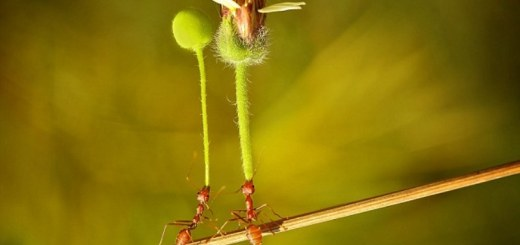 ant giving flower to a friend2