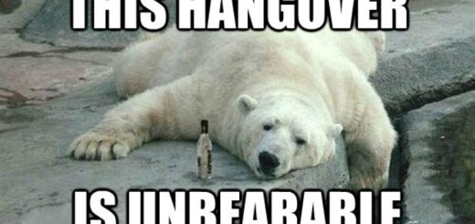 hangover_New_Love_Times