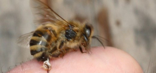 home remedies for bee stings_New_Love_Times
