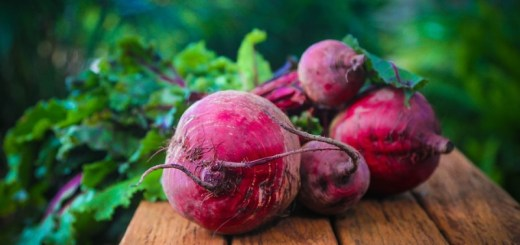 beetroot_New_Love_Times