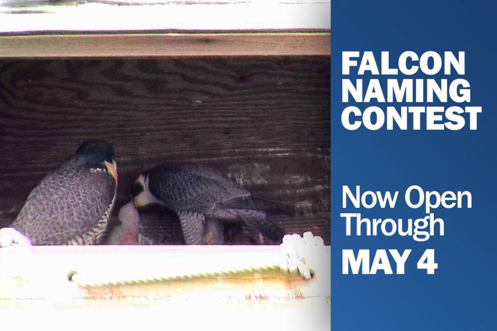 FalconNamingContest2016_v2