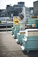 Fortnum-&-Mason-Piccadilly-beehives