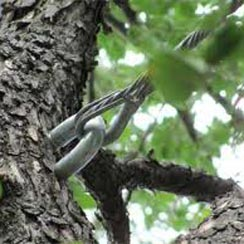 Newton Tree Service provides tree cabling and bracing.