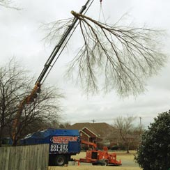 Newton Tree Service provides expert tree removal services.
