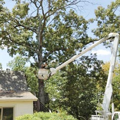 Newton Tree Service is fully insured for all removal and trimming jobs.