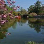 Lago nel giardino botanico