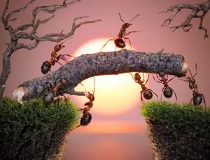 hormigas organizadas
