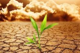 semilla en el desierto