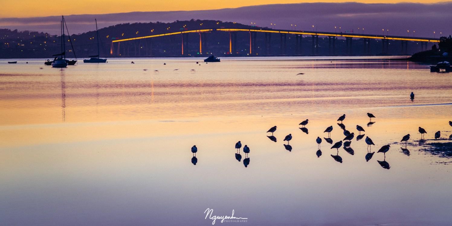 dawn at Cornelian Bay, Tasmania, Australia