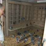 Inside Pigeon Nest