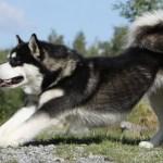 Large Dog Breeds