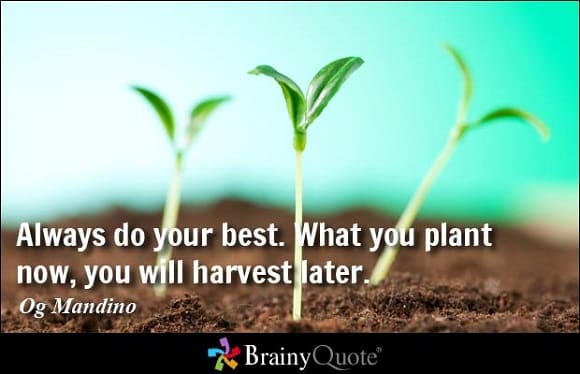 plant-seeds-now-for-success-later